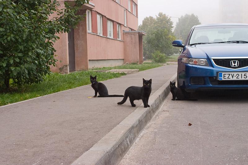 Musta Kassi Päev : Tartu pildid kolm musta kassi